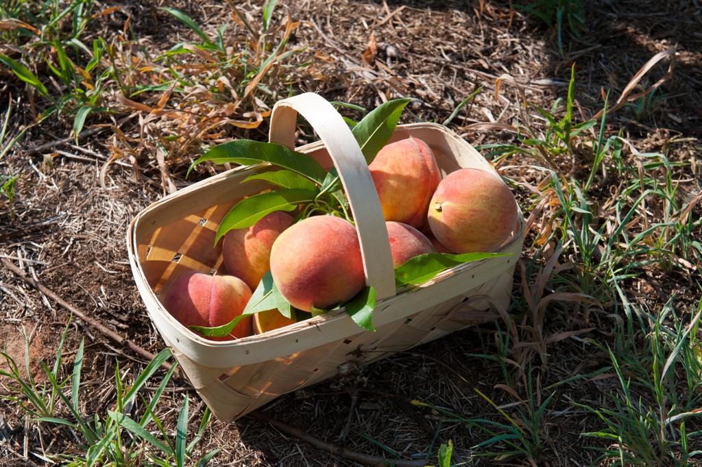 Home - Peach County